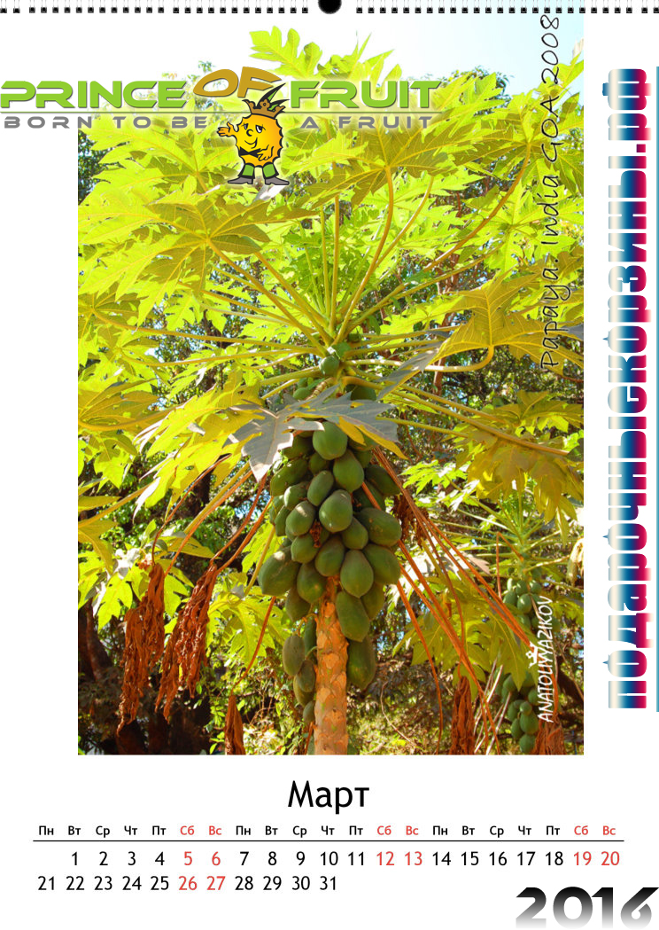 Papaya Art Calendar Uk : Папайя papaya